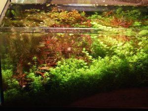 Read more about the article SISTEMA SABBIA – New Age Aquarium