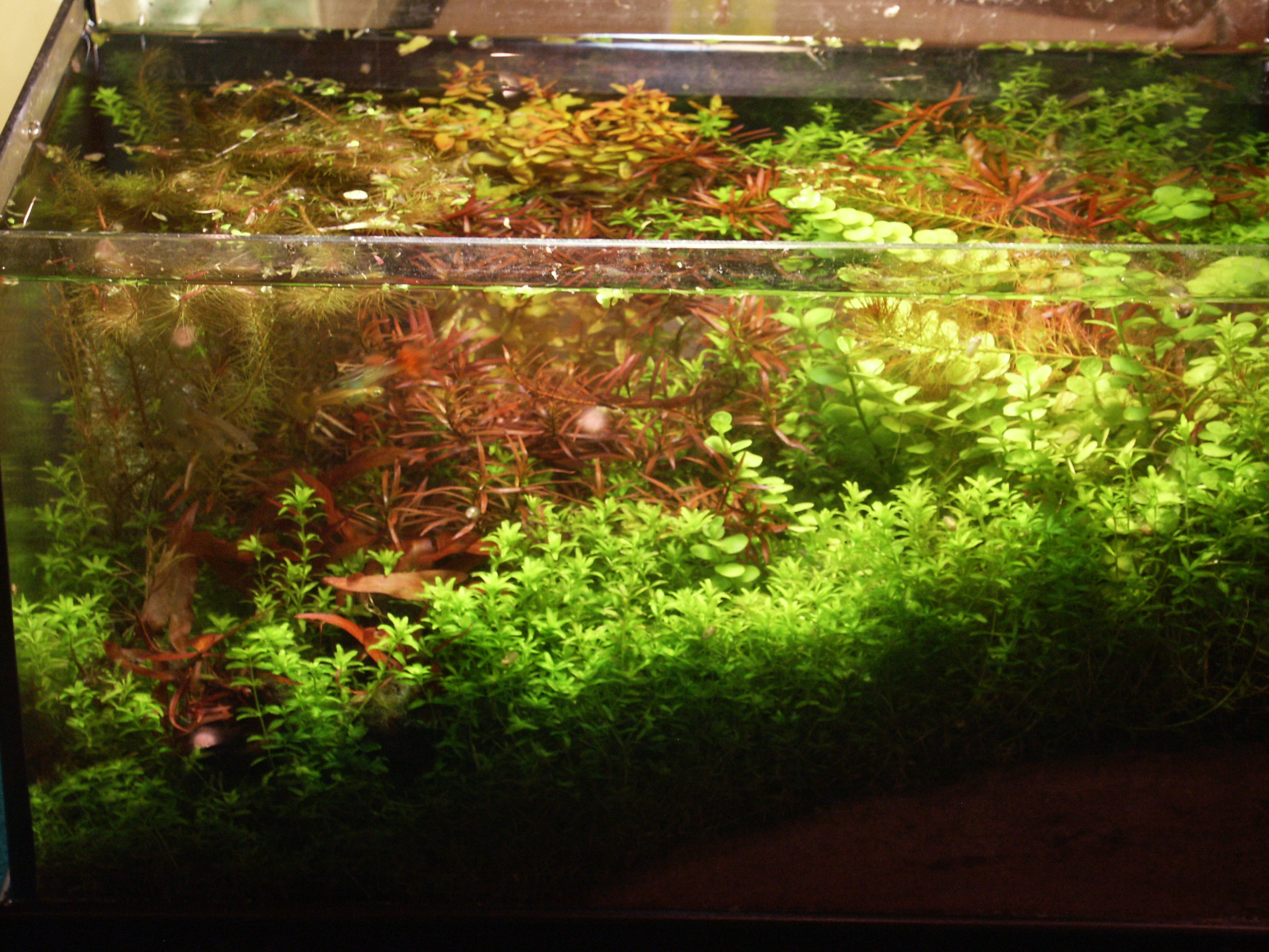 SISTEMA SABBIA – New Age Aquarium
