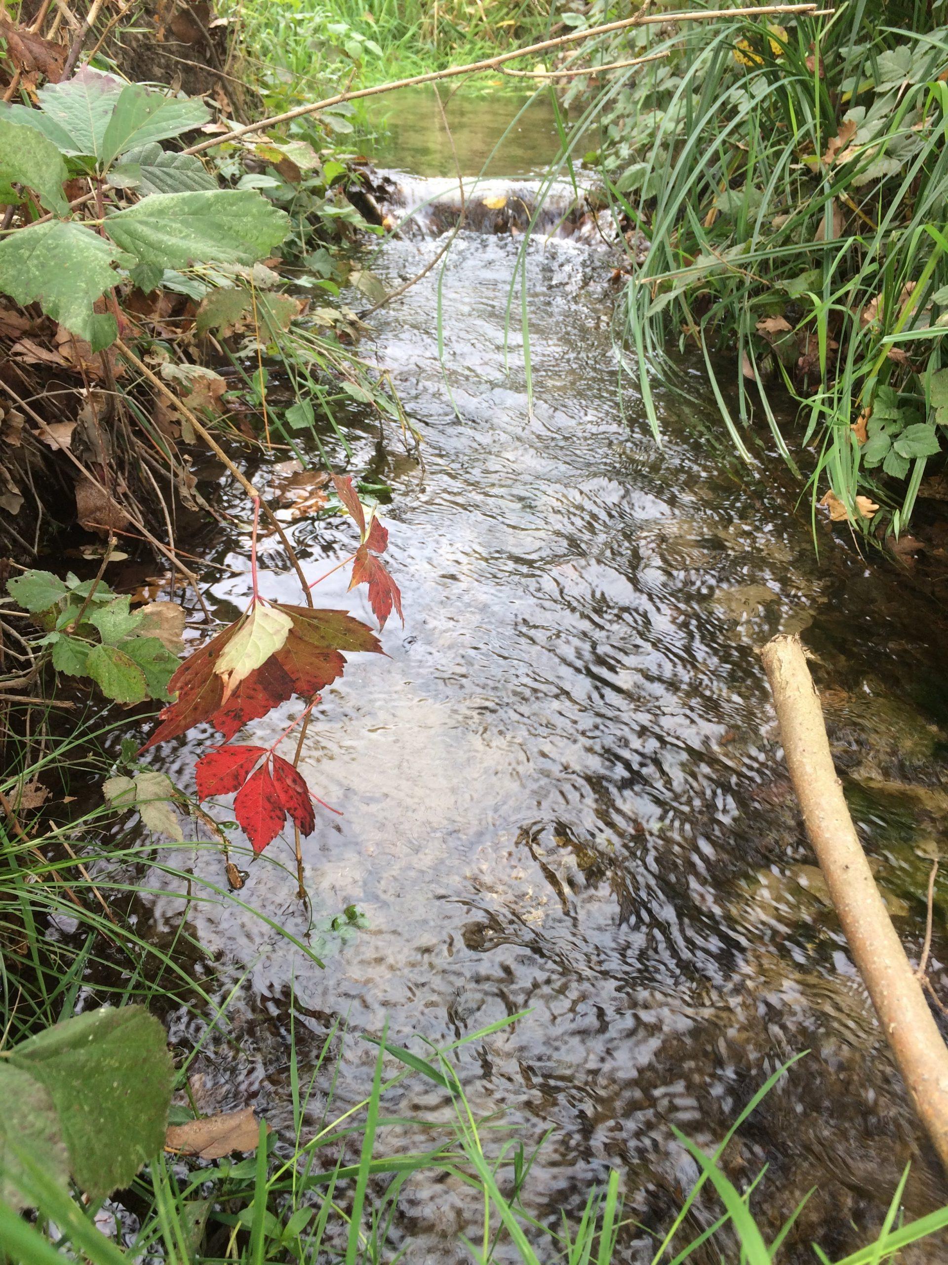Un acquario a corrente: Aquarello – Acquario Ruscello – Ruscello bonsai – Streaming Wabikusa.