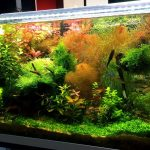Le piante d'acquario: Zio Pesce Blog consiglia …….